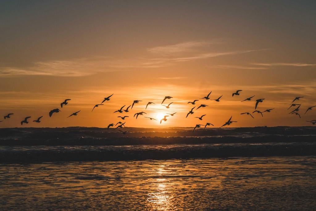 2016_04_05_ocean_beach_birds_2c_fixed_3