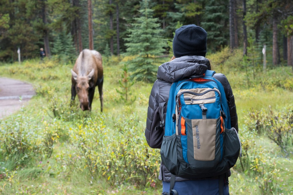 2016_09_09_lizzy_vs_moose